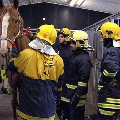 Palomiehet harjoittelevat ratsutallilla.
