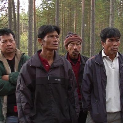 Thaimaalaiset marjanpoimijat