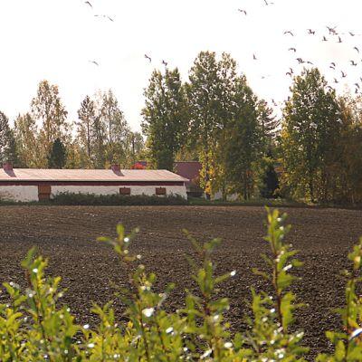 Kuvassa maatila. Etuallalla näkyy syyskynnettyä peltoa. Taustalla punavalkoinen vanhan navetta ja talon pihapiiri.