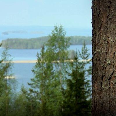 Näkymä Puijon metsästä