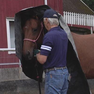 Hevoskouluttaja Kari Vepsä ja Nova -niminen ratsu hakevat luottamusta yhteisen pressun alla.