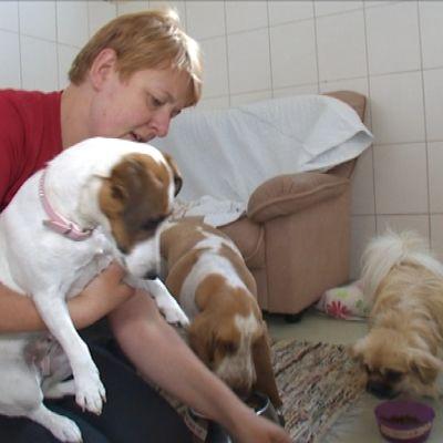 Hoitaja pitää sylissään koiraa ja ruokkii samalla kahta muuta koiraa.