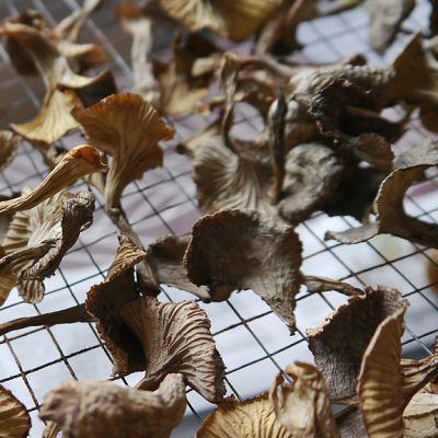 Kuivattuja sieniä.