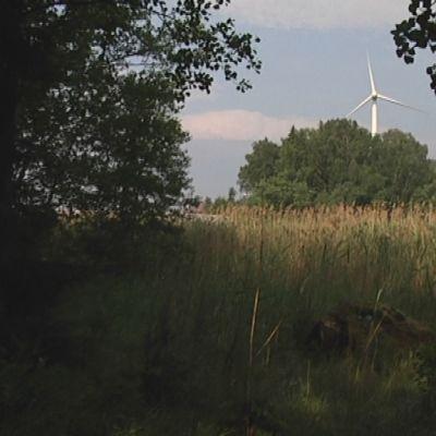 Kaislikon ja veden takana näkyvät tuulivoimala ja ydinvoimalan piippu.