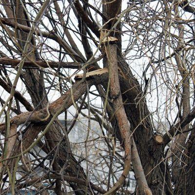 Tykkylumen aiheuttamia vaurioita terijoensalavissa