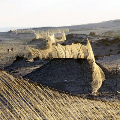 Lintuverkko rannalla Egyptissä.