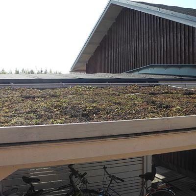 Pyöräkatoksen katolle on istutettu viherkatto, joka alkaa vihertää kevään edetessä.