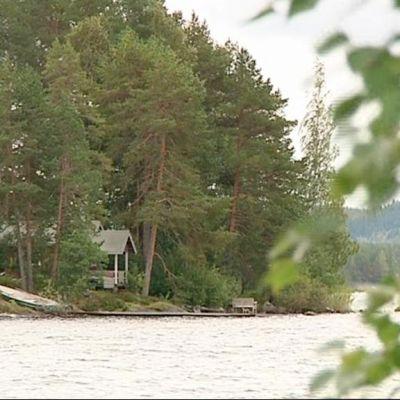 Sauna mäntymetsässä järven rannalla.