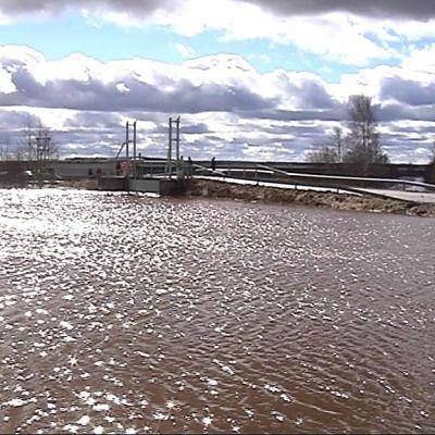 Lapuanjoesta avattiin tulvapadot pelloille Löyhingin pumppaamolla 20.4.2013.