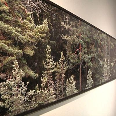 Valokuva Jyväskylän taidemuseon näyttelystä.