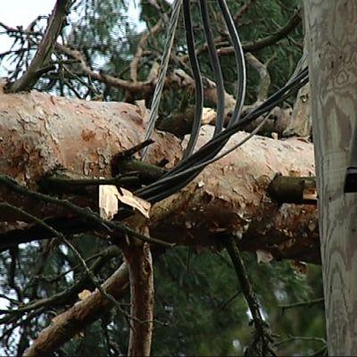 Myrsky kaatunut puu sähkökatko espoo 27.12.
