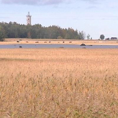 Kuvassa Rummelön maisemaa Kokkolasta, taustalla Harrbådan majakka
