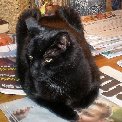Musta kissa makaa pöydällä sanomalehtien päällä.