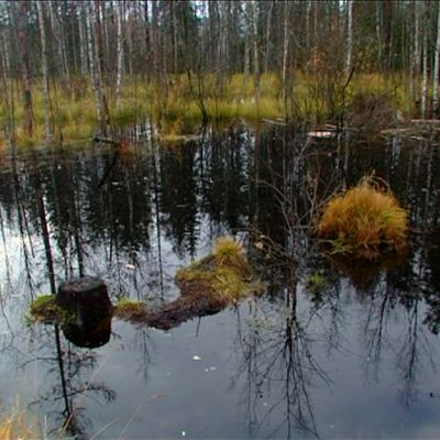 Majavan patoama puro