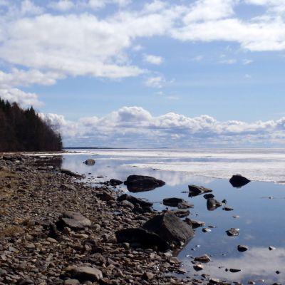 Järvimaisema Kuhasalon luontopolulta Pyhäselälle päin.