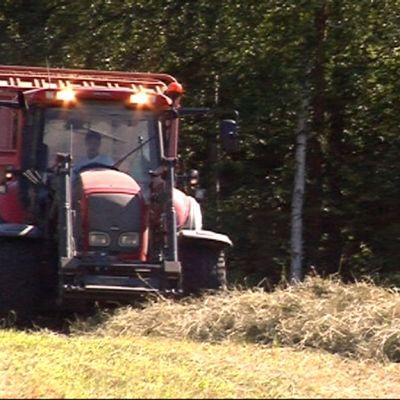 Traktori poimii kuivaheinää pellolta.