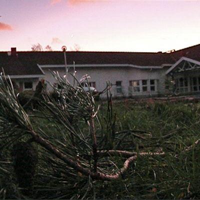 Pimeänä oleva talo, etualalla irtirepeytynyt männynoksa.