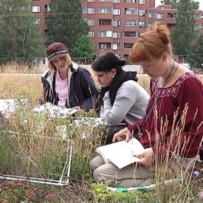 Helsingin yliopiston tutkijoita viherkatolla Pohjois-Haagassa