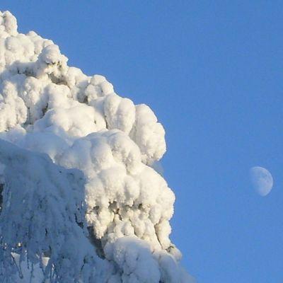 Paksua lunta ja kuutamo