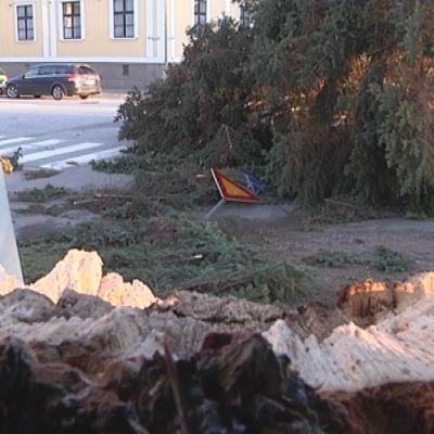 Risteysalueelle kaatunut puu Porin keskustassa.