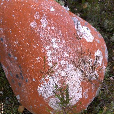 Punainen kivi.