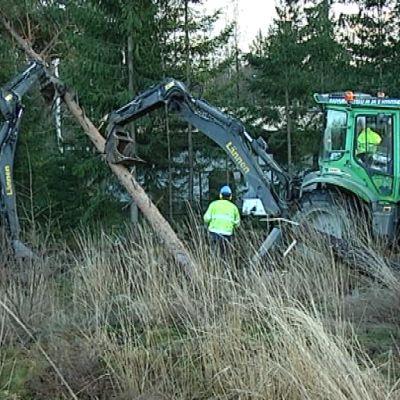 Kaatuneiden puiden raivausta Tapaninmyrskyn jälkeen.