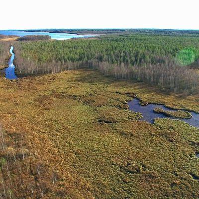 Umpeenkasvanut lampi ja kanava Oulujärvessä.
