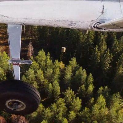 Lentokoneesta tippuu pieneläimille tarkoitettu raivotautirokote.