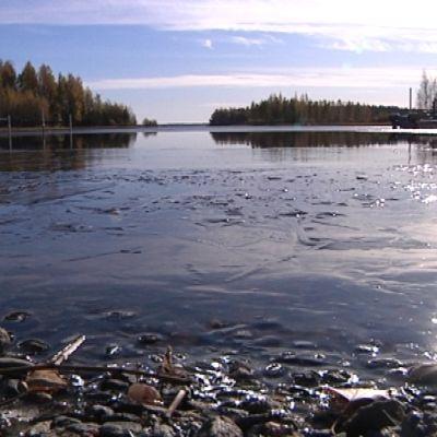 Kalajäven tuntumaan on kaavoitettu 20 tonttia. Ne soveltuvat sekä vaapa-ajan asuntojen että pysyvien kotien rakentamiseen.