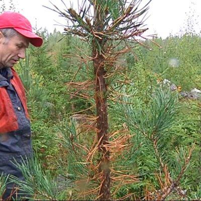 Mies katsoo puuta