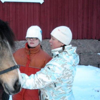 Kultsi-ruunaa käytetään ratsastusterapiassa.