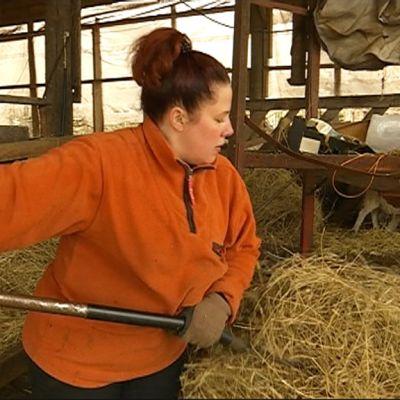 Nainen antaa lampaille heinää pihatossa. Kuvassa äitienpäivänä 2017 kunniamerkillä palkittava iittiläinen Henna Leiramo