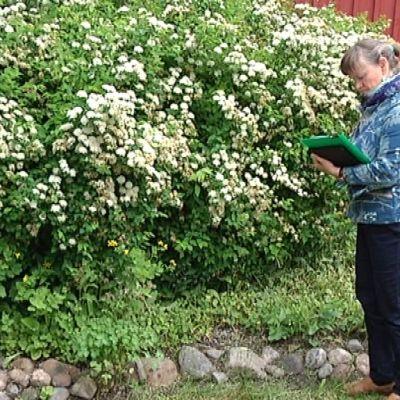 Maisema-arkkitehti Anne-Rihtniemi Rauh löytää vanhoilta pihoilta sellaista, mitä moni ei huomaa.