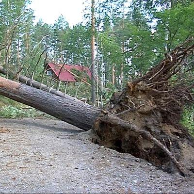 Ilmavoimat aloittaa Asta- ja Veera-myrskyjen metsätuhoja ilmakuvauksen.