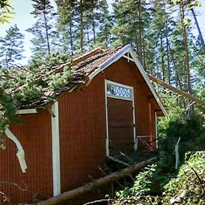 Navetan päälle kaatunut puu, jota moto korjaa pois. Kiira-myrsky