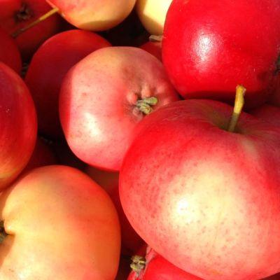 Punaisia omenoita.