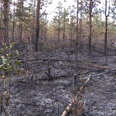 Metsäpalo on sammutettu.