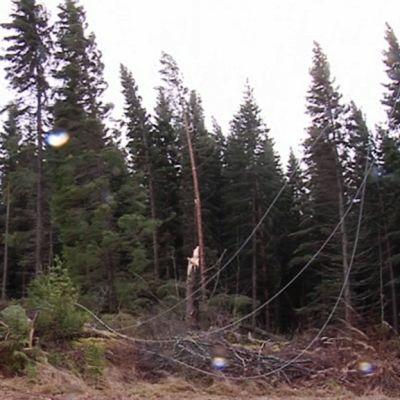 Eino-myrskyn katkomat puut ovat katkoneet sähkölinjoja.