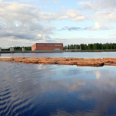 Tukkiniput kelluvat Kaltimon kanavan ja voimalaitoksen yläjuoksulla Joensuun Enossa.