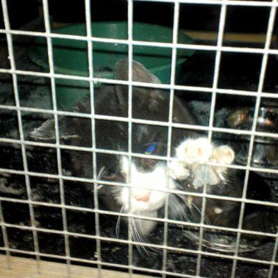 Sairas kissa Imatran löytöeläintarhassa