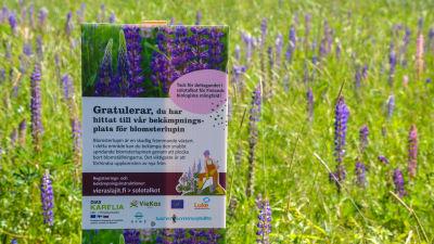 En skylt bland alla lupiner, där det står gratulerar du har hittat till vår bekämpningsplats för blomsterlupiner.