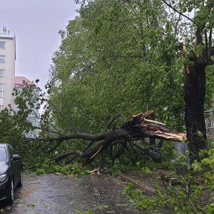 Violankadulla Helsingissä myrskyssä kaatunut iso lehtipuu tien päällä.