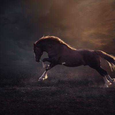 Johanna Sjövall kuvaa hevosten voimaa ja kauneutta.