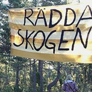 """Banderoller med texten """"Stoppa brottet"""" och Rädda skogen"""" är upphängda i en skog."""