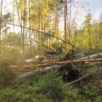Trombi kaatoi puita Joutsassa