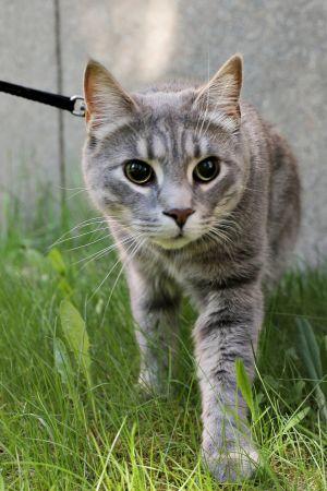 Tuisku sokea kissa
