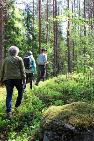 Kolme ihmistä kävelee metsässä