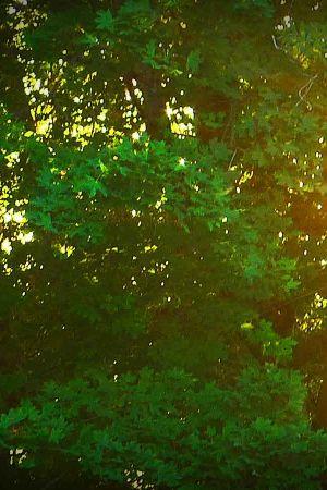 metsä, aurinko paistaa puiden lomasta