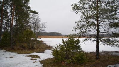 Långvasstranden i Kopparnäs Ingå.