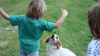 Barn leker med hundar. Det är fortfarande vanligt att barn är hemma med mor- och farföräldrar i stället för att gå på dagis under sina tre första år.